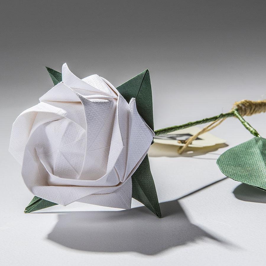 Rosa Akashi blanca