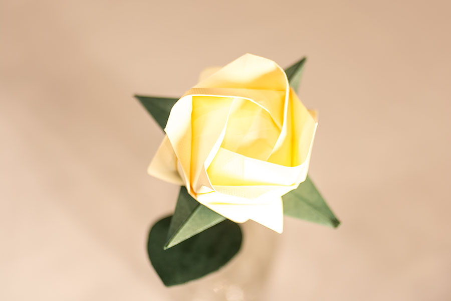 Rosa Akashi crema