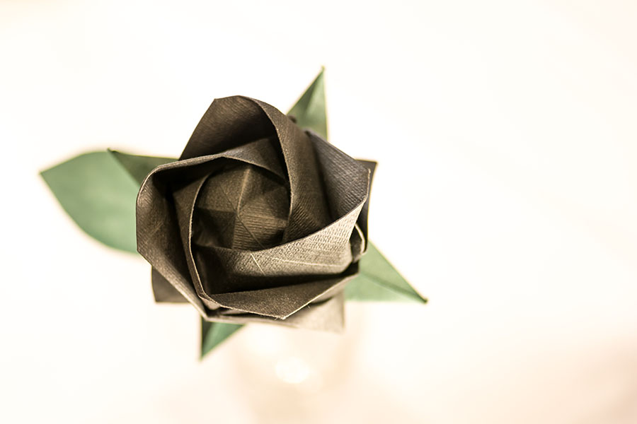 Rosa Akashi negra